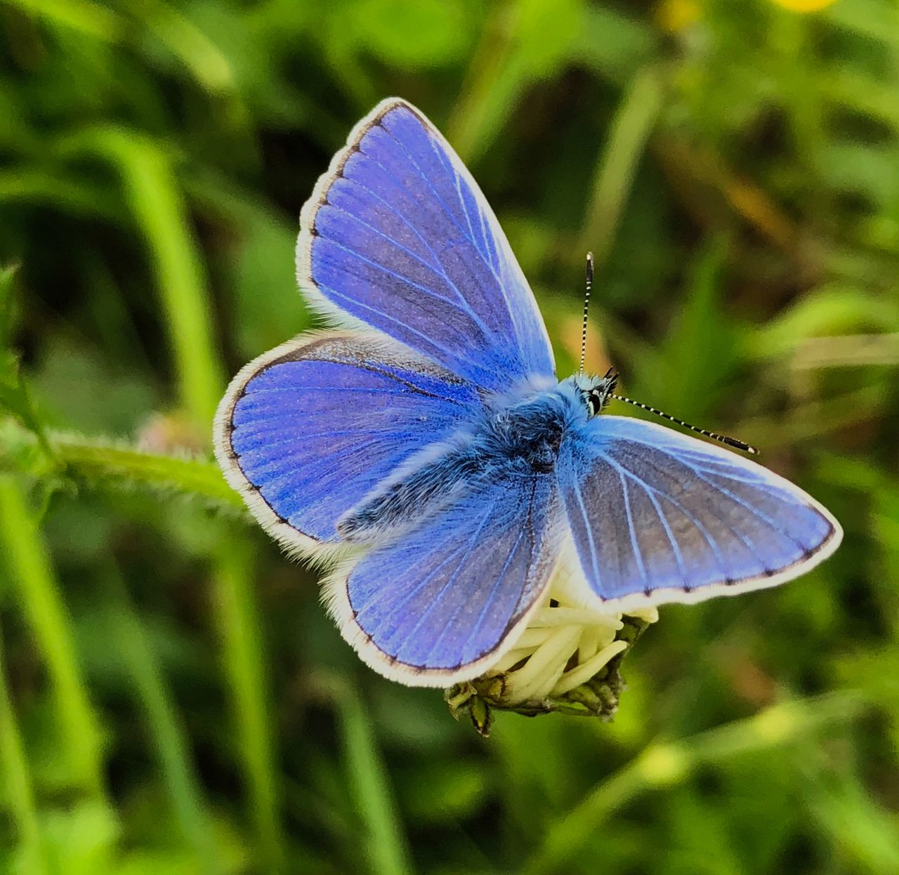 invertebrate, insect, one animal, animal wildlife, animals in the wild, animal themes, close-up, animal, animal wing, plant, beauty in nature, focus on foreground, blue, butterfly - insect, flower, no people, day, nature, growth, purple, butterfly