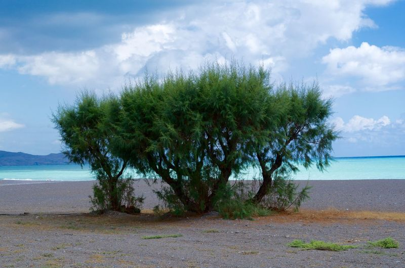 Rhodes, Greece. Rhodes Turquoise Sea Seaside Beach Beachphotography Paradise Paradise Beach Paradise On Earth Water Vocation Tree Nature Holidays Summer Enjoying Life Picoftheday Pictureoftheday Picofthemoment Picoftheweek Beatiful Beatiful Nature Awesome Pentax Colour Of Life