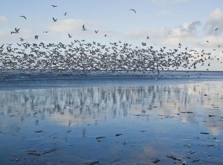 Animals In The Wild Beauty In Nature Bird Cloud - Sky Flock Of Birds Flock Of Gulls, Seascape, Reflections Of Birds In Sea Flying No People Sky Tranquil Scene Tranquility Water