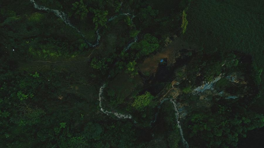 High angle view of people on rock in forest
