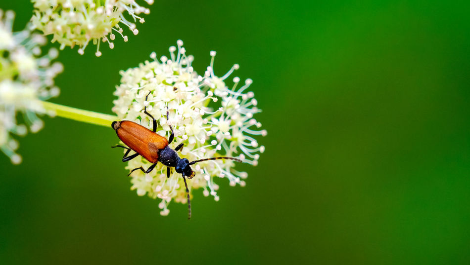 Animal Animal Themes Animal Wildlife Beauty In Nature Close-up Flower Insect Nature No People One Animal Outdoors Plant