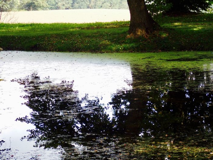 Best travel moments ... Great Outdoors Late Summer Colours Beauty In Nature Day Grass Growth Lake Nature No People Outdoors Puddle Reflection Romantic Place Scenics Tranquility Tree Water
