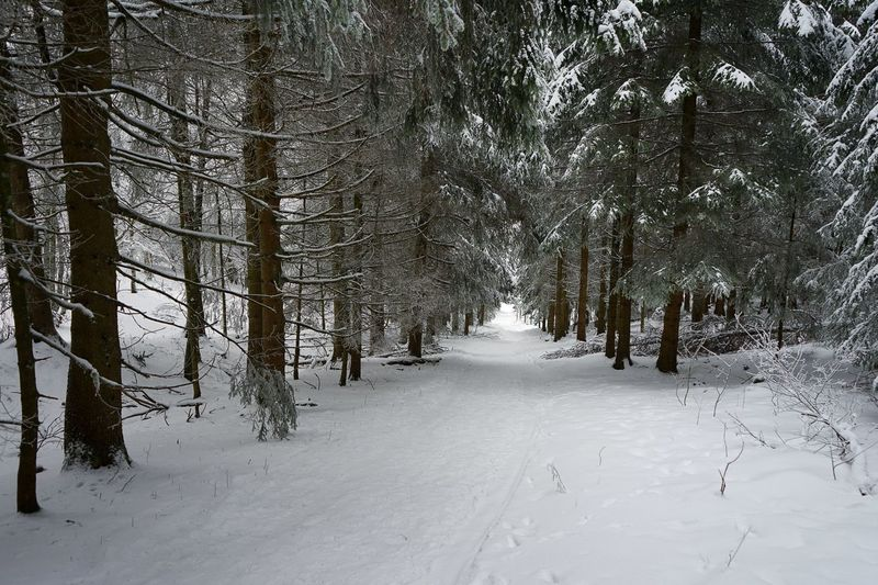 Forest at snow