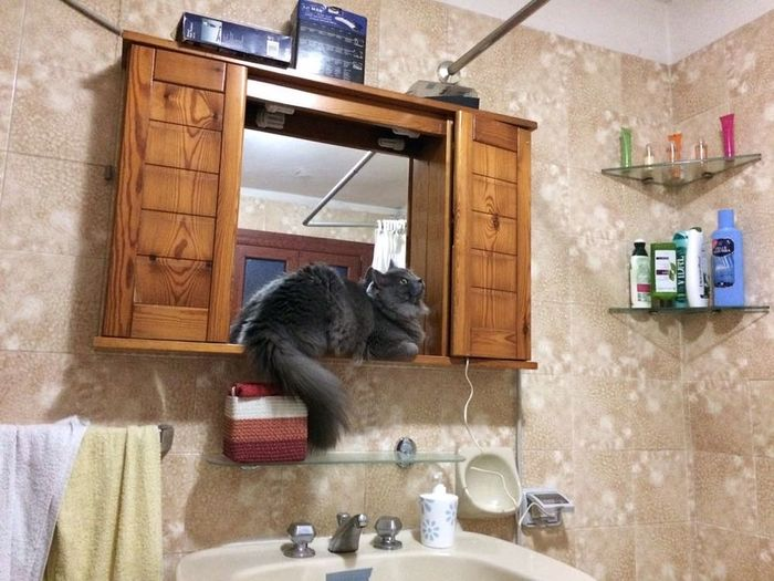 Cat Bathroom Cat In The Bathroom Toilet Funny Funny Cat Indoors  Domestic Kitchen Domestic Room Home Interior Kitchen Domestic Life Day Cabinet No People