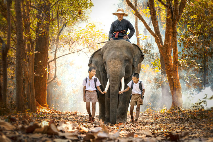 Man sitting on elephant with boys walking in forest