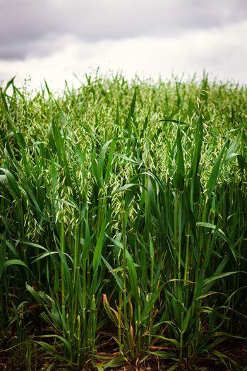 Crops EyeEm