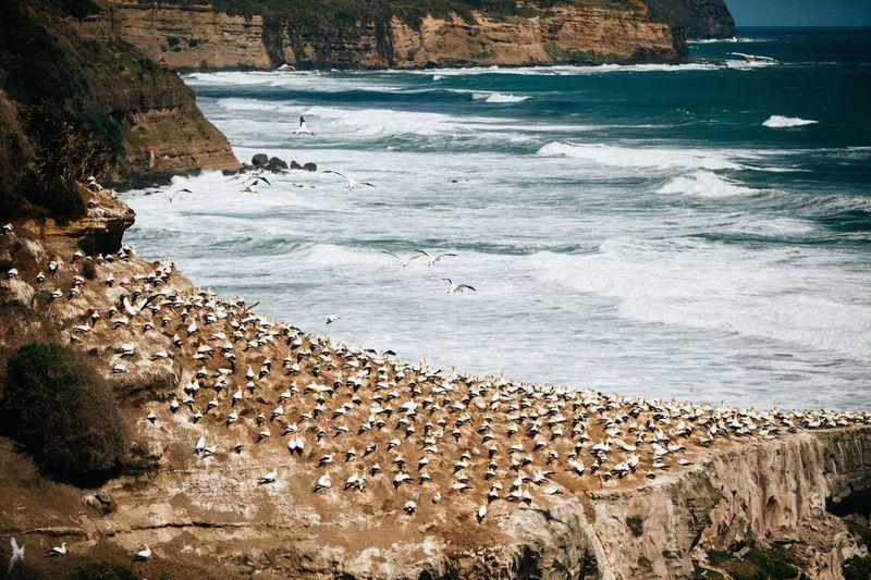 Flock of birds perching at beach