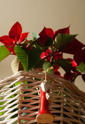 Merry Christmas! #Christmas #Holidays #Santateresagallura #christmastime #giftsfrommydog #joy Indoors