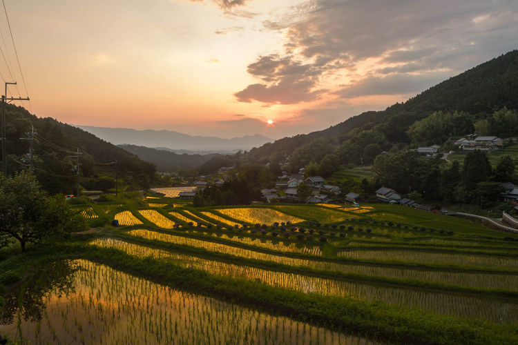 Scenic View Of Rice Paddy Against Sky During Sunset