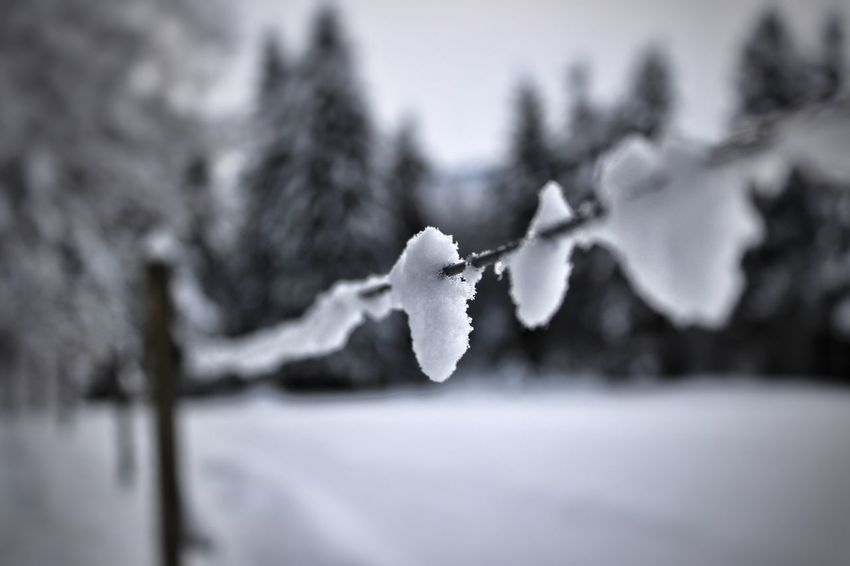Snow on Fence❄️❄️ Winter Snow Cold Temperature Frozen Ice Snowing Selective Focus Nature No People Day Snowflake Close-up Tree Beauty In Nature
