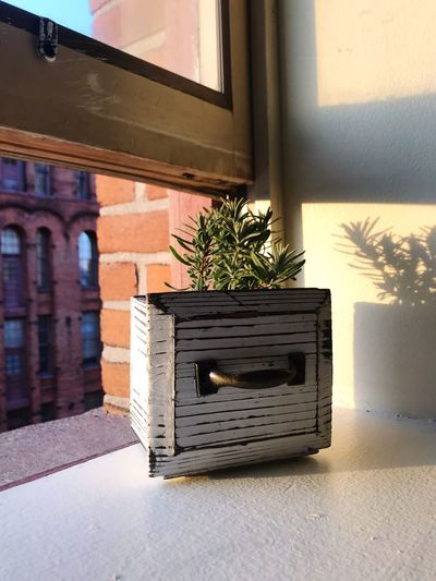 Light And Shadow Plants New York Apartment Buildings Apartment Brick City Life City Lavender Window Sill Plant Nature Built Structure Architecture No People Growth Sunlight Window Potted Plant Day Building Exterior Wall - Building Feature Shadow Outdoors Building Wall Wood - Material