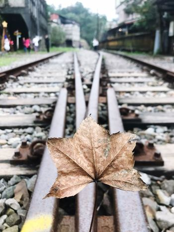 Leaf Autumn Change Focus On Foreground Day Transportation Outdoors Close-up Railroad Track No People Fragility Maple Nature Architecture