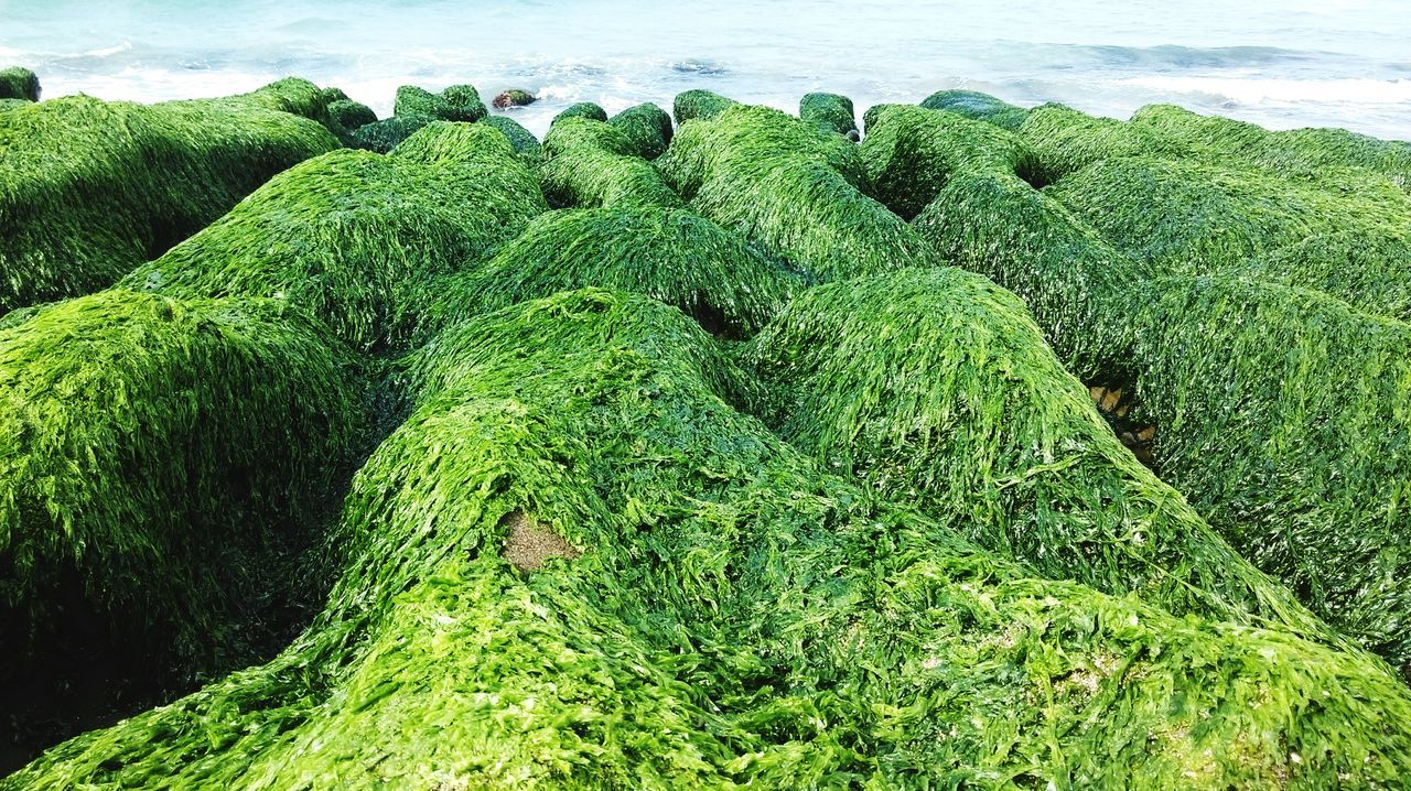 High angle view of moss growing against sea