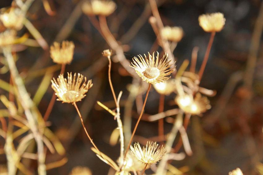 Dry Flower  Dry Leaves Fragility Summer