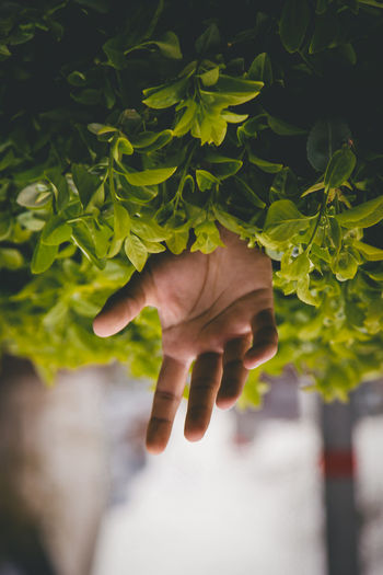 Close-up of hand amidst plants