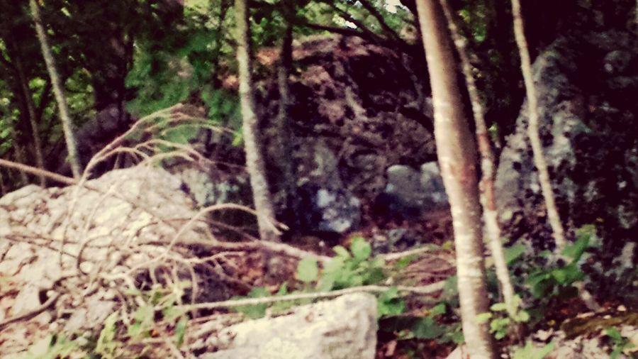 Hiking EyeEm Nature Lover