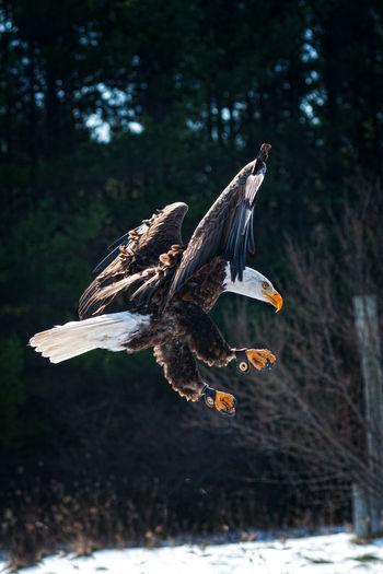 Bird flying against trees