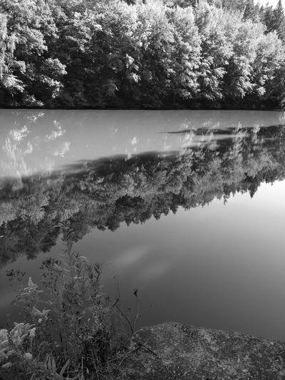 Baum Bäume EyeEm Best Shots EyeEm Nature Lover Eyemphotography Forest Forests Lake Lakes  Landscape Landschaft Natur Nature Oneplus3 See Seen Spiegelung Teich Teiche Tree Trees Wald Wasser Water Wälder