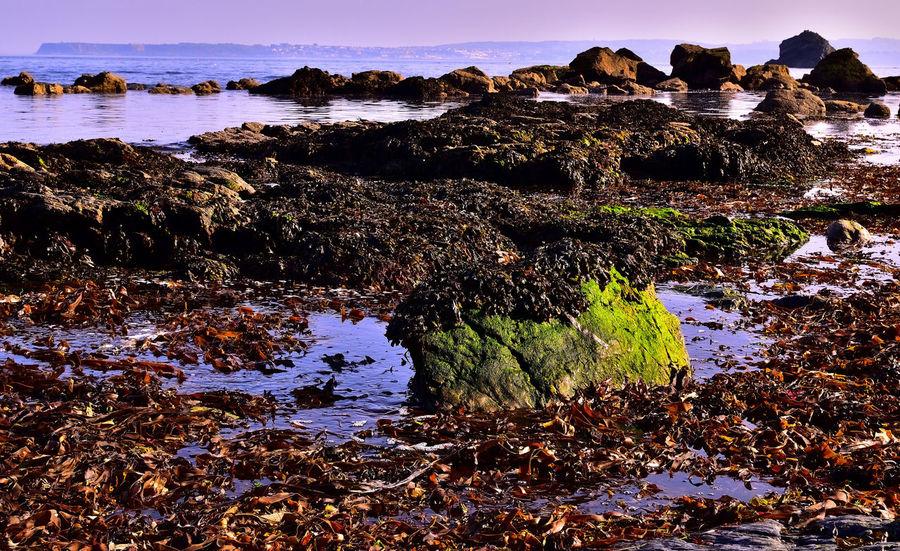 Devon UK Torbay Torquay Landscape_photography Meadfoot Beach Rock Rock - Object Sea Sky Water
