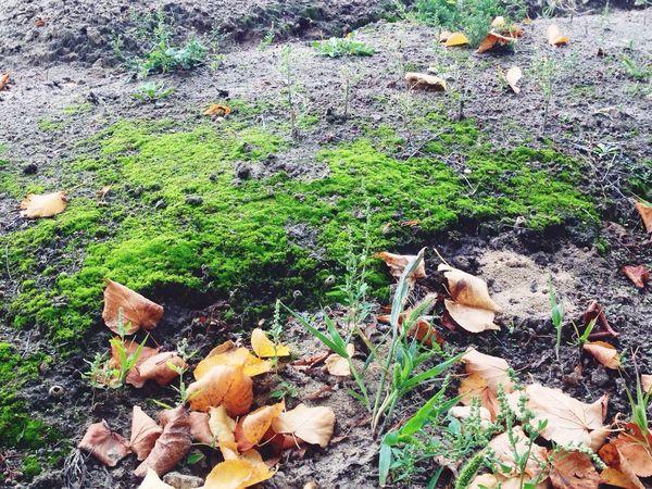 Power of moss