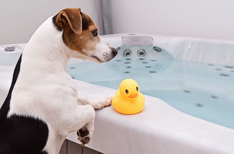 Side view of dog standing by bathtub in bathroom