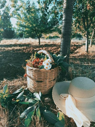 View of fruits in basket on field