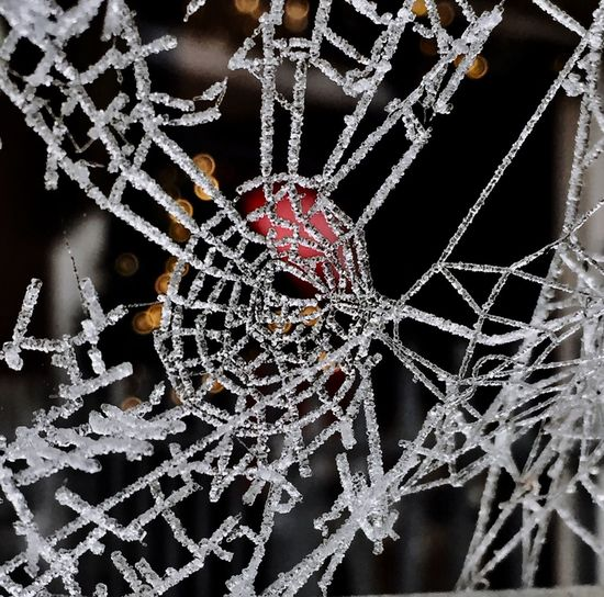 even the cobwebs are adorned for Holy Christmas.... Christmas Nature