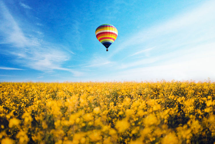 LOW ANGLE VIEW OF HOT AIR BALLOON Flying Over Flower Field