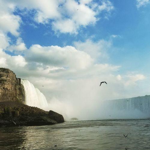Niagara Bird Flying Nature Animal Wildlife Cloud - Sky Outdoors Water Waterfall No People The Great Outdoors - 2017 EyeEm Awards