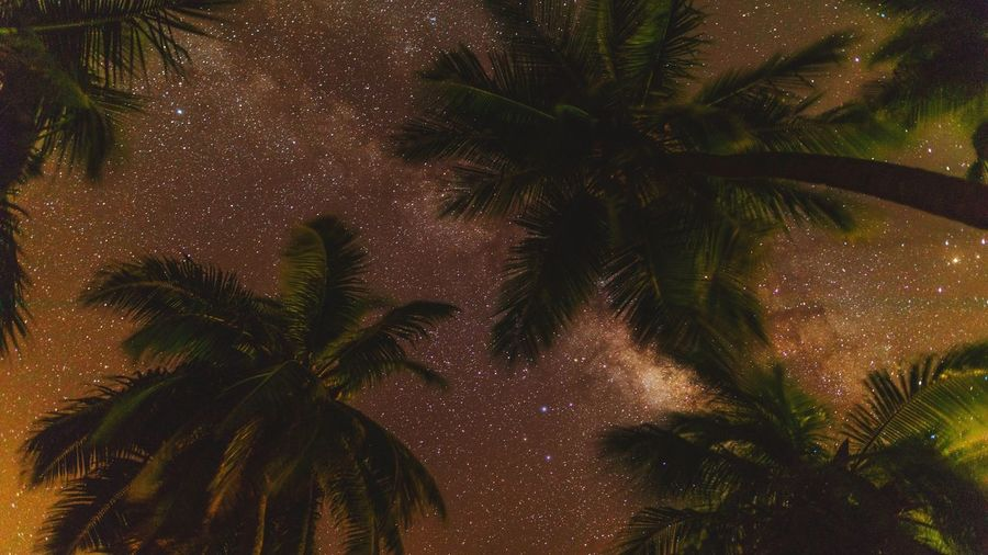 Milkyway Palm Tree Night Tree Low Angle View Sky No People Outdoors Nature Beauty In Nature EyeEmNewHere