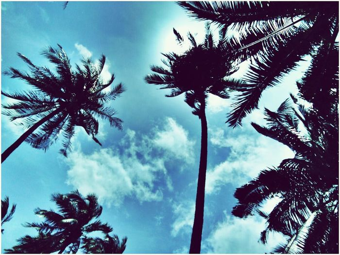 Sky😍 Palm Tree Tree Sky Day Blue Nature Beauty In Nature Coconut Palm Tree Thailand Tall - High Tall Likeforlike Follow4follow