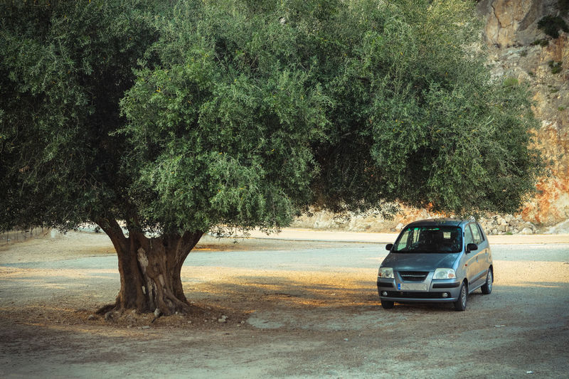 Car parked under the olive tree Tree Transportation Car Motor Vehicle Nature Land Vehicle Road Growth City Land Green Color Outdoors No People Travel Street Journey on the move Road Trip Olive Tree