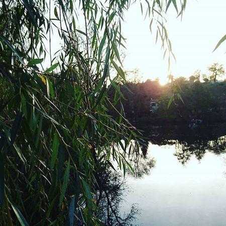 French natur Nature France River Riviere Clisson Sevrenantaise Soleil Sun Coucherdesoleil