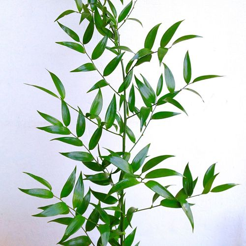 Life Green Plant White Background White Wall