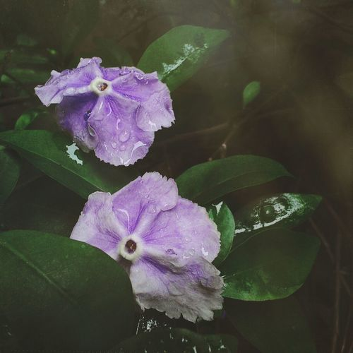 EyeEm Flower Flowerlover Flower Mobilephotography Purple Purpleflower Lightleaks Sunlight ☀ Macro