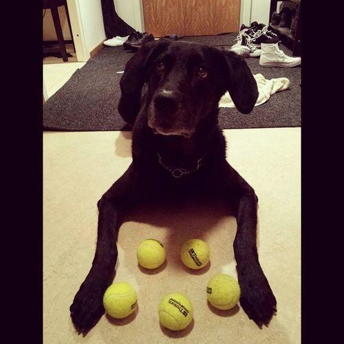 The Dog with Selfcontrol Sebbethedog