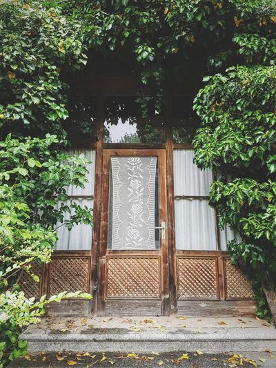 Stairs Rainy Days Rain Italy Tree Wood - Material Entrance Door Architecture Plant Ivy Gate