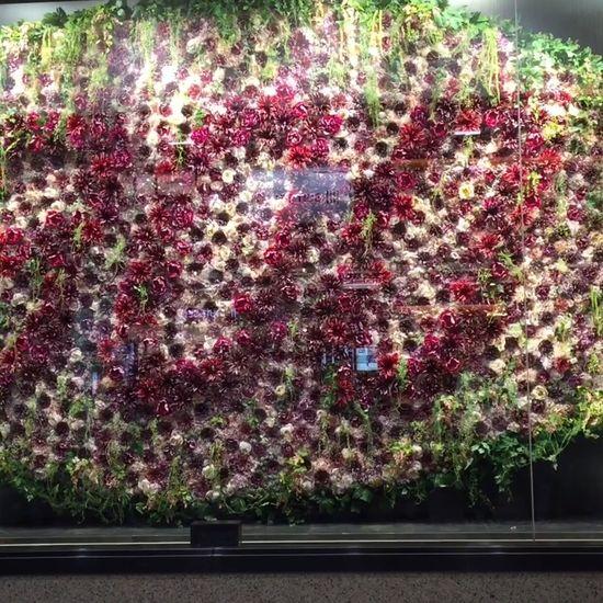 Showwindow Flowers 300 Department Store Display