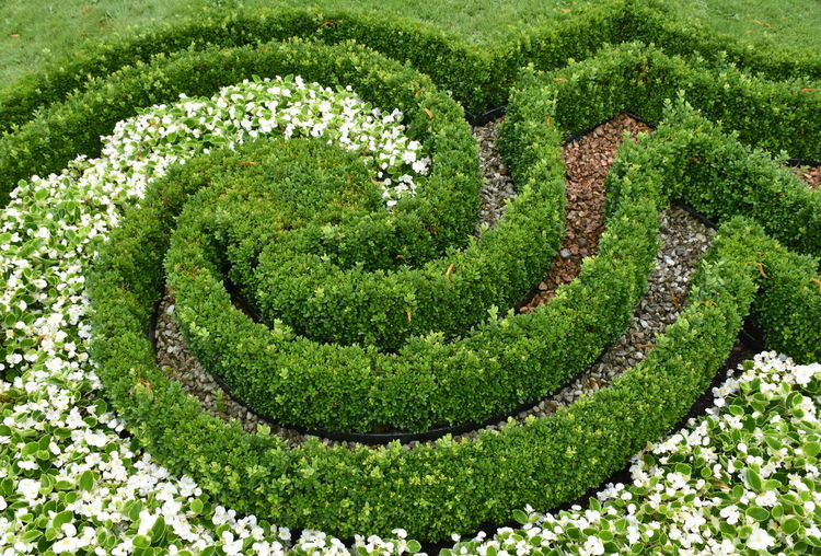 Beauty In Nature Flower Freshness Garden Green Color Growth High Angle View Nature No People Ornamental Garden Outdoors Park Plant Shape