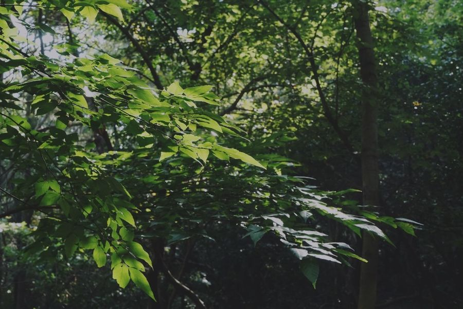 Plant Tree Growth Green Color Plant Part Leaf Nature