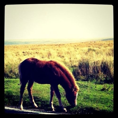 #horse #pony#countrylife #nature #god #creation #grass #moutain
