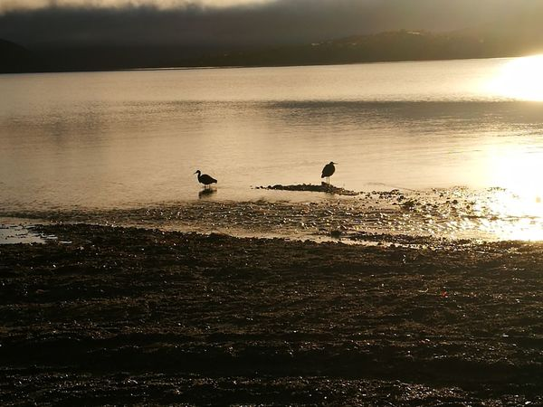 Nature Animal Wildlife Lake View New Zealand Sunrise Morning Power In Nature Camp Ground