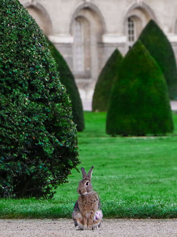 I'm late! I'm late! I'm late! Alice Bunnyrabbit Castle France LoveNature Nature Alice In Wonderland Aliceinwonderland Animal Animal Themes Artphotography Bunny  Bunnylife Bunnylove Bunnylovers Frenchphotographer Garden Grass Mammal Naturelovers No People One Animal Palace Photography Rabbit