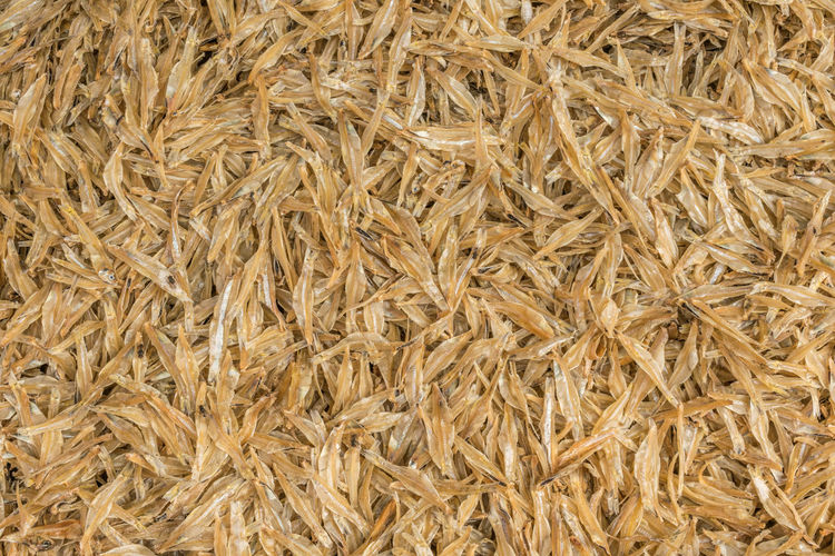 Abundance Agriculture Backgrounds Brown Cereal Plant Close-up Crop  Food Food And Drink Freshness Full Frame Healthy Eating Large Group Of Objects Nature No People Plant Raw Food Ripe Textured  Wellbeing Wheat