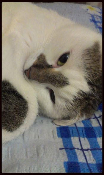Cat♡ Popular Photos