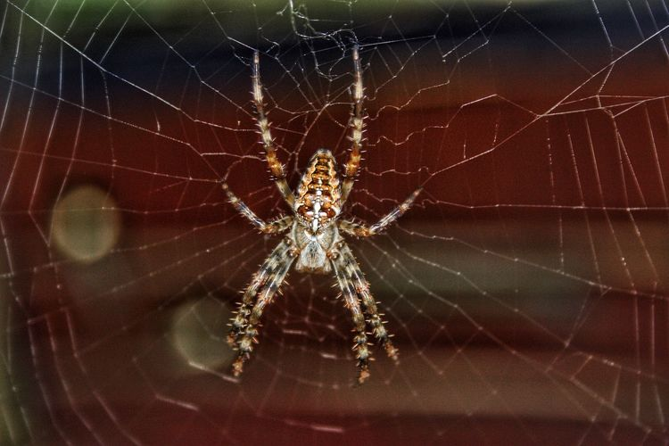 Spider Spider Web One Animal Animal Themes Close-up Animals In The Wild Web Fragility Focus On Foreground Insect Nature Survival Animal Wildlife No People Animal Leg Outdoors Intricacy Spinning Day Beauty In Nature