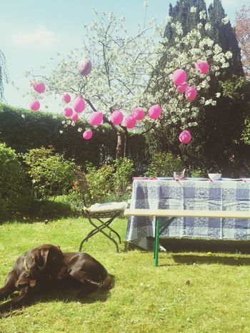 Gardenparty Beerbench Balloons Babyshower Trees Coffeetable Dog Labrador Summer
