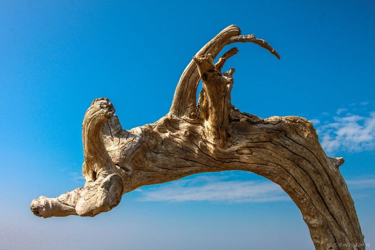 Whilst exploring the island, I noticed this log, it caught my eye because the first thought that came to mind was that it looked like a dragon? Anyone else see the same? From My Point Of View Outdoors Clear Sky No People Sky Nature Low Angle View Day Blue EyeEm Best Shots Taiwan EyeEm Masterclass Beauty In Nature Canon EyeEm Gallery EyeEmBestPics Nature Travel Explore EyeEm Nature Lover Hello World Log Abstract