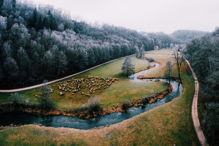 Aerial view of herd of sheep by canal against trees