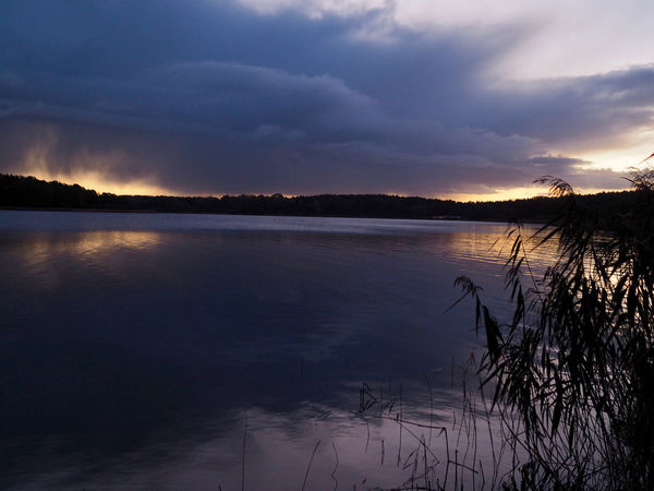 Schilf Wolken Beauty In Nature Blau Cloud - Sky Day Lake Landscape Morgenstimmung Nature No People Outdoors Reflection Scenery Scenics Seeufer Silhouette Sky Sunset Tranquil Scene Tranquility Tree Water